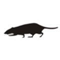 Black Rat Badge