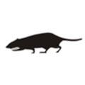 Red Rat Lapel Badge